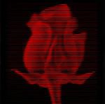 Rose (2011)